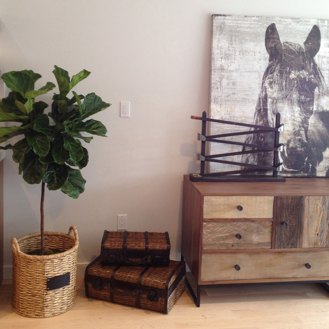 modern white oak flooring with reclaimed wood storage piece and basket with potted fiddle leaf fig and horse head art design by sara bates interior design